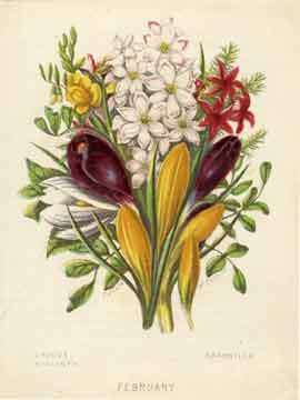 Reward Card printed by William Dickes from The Monthly Flower Garden set published by the Society for Promoting Christian Knowledge - 1859